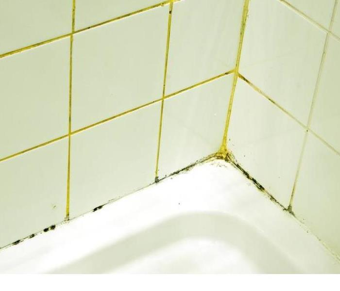 Mold Remediation How to Prevent Mold in your Bathroom