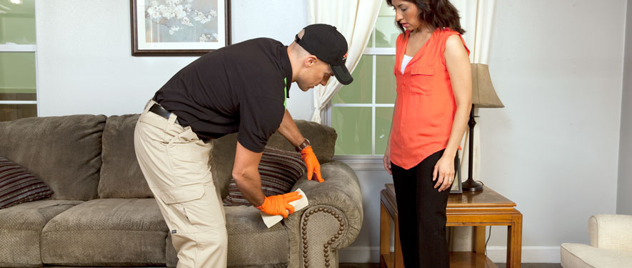 Lombard, IL carpet upholstery cleaning